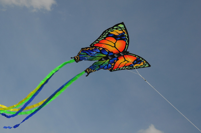 latawiec motyl kolorowy